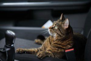 wypożyczalnia samochodów szczecin zwierzęta